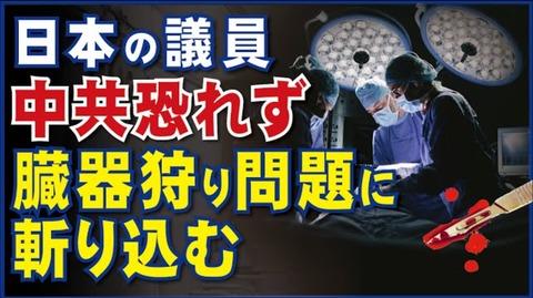 日本の議員、中共恐れず、臓器狩り問題に斬り込む。