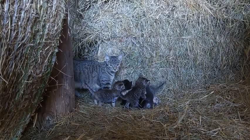 Snuggles & the Kitties