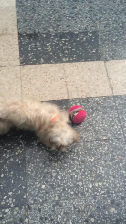 Doggo wants to go play
