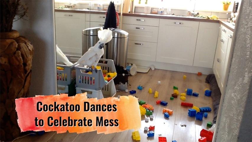 Cockatoo Dances to Celebrate Mess