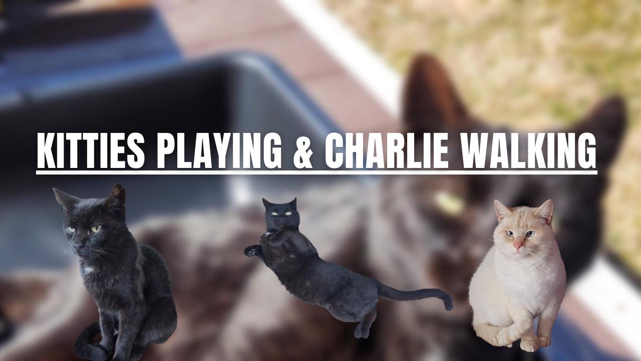 Kitties playing & Charlie walking