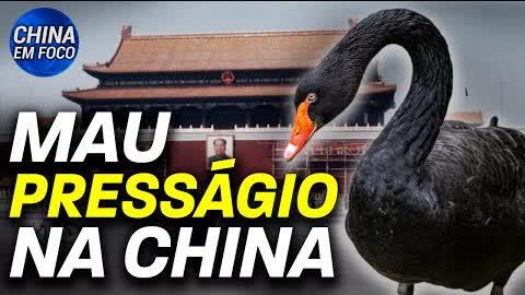 Cisne negro é visto na Praça Tiananmen em Pequim; Grã-Bretanha apresenta porta-aviões ao Japão