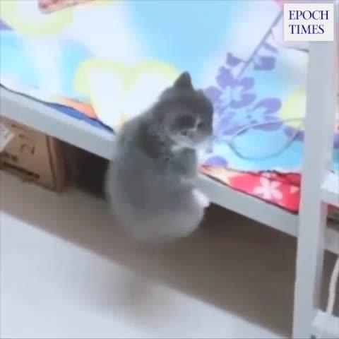 Katzen machen was sie wollen