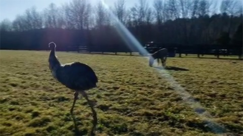 'Walking Dead' actor Jeffrey Dean Morgan to adopt bonded donkey, emu