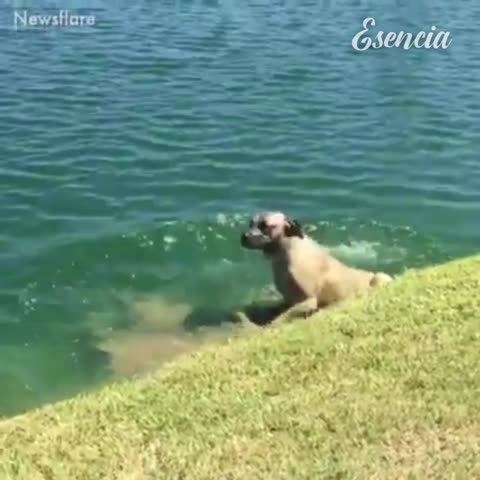 Estos perros son adorables y divertidos 🤣 🤣 ❤️