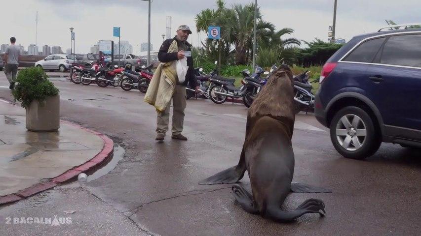 Roberto the Sea Lion