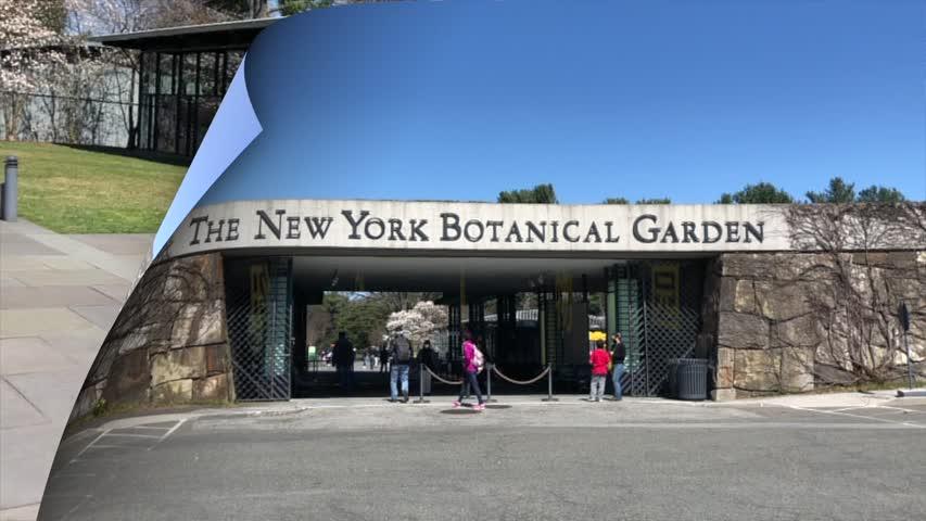 纽约植物园---New York Botanical Garden/An Angel Of This World(天使在人间第5期)