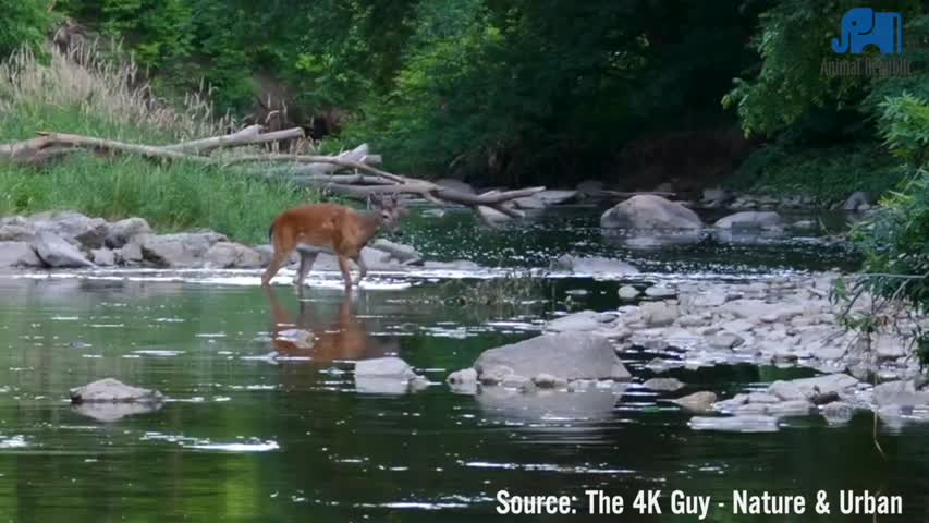 Deer and Mink Socially Distancing