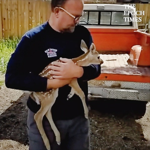 Mother Deer Is Reunited With Baby