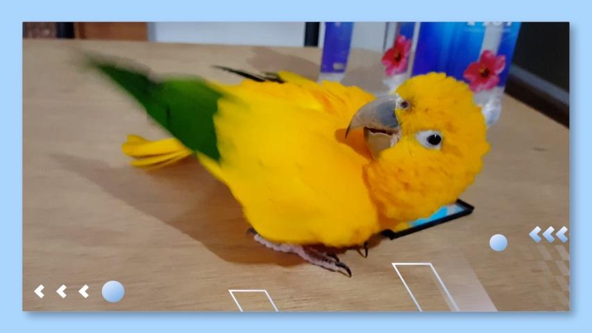 Bird dance on mirror