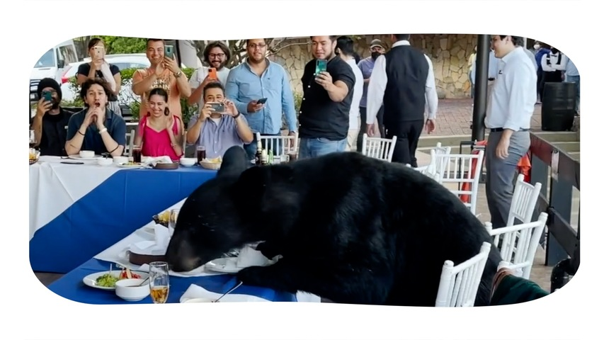 Black Bear Crashes Friends' Reunion Party To Eat Food Off Dinner Table