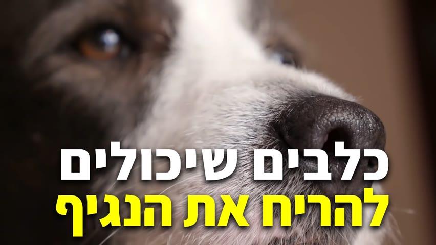 כלבים שיכולים להריח את נגיף הקורונה