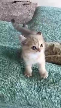 "When I ask this kitty how the Tiger growls...  鏟屎官用俄語問,""喂,老虎怎麼叫?""  小貓咪的回答火了!!!"