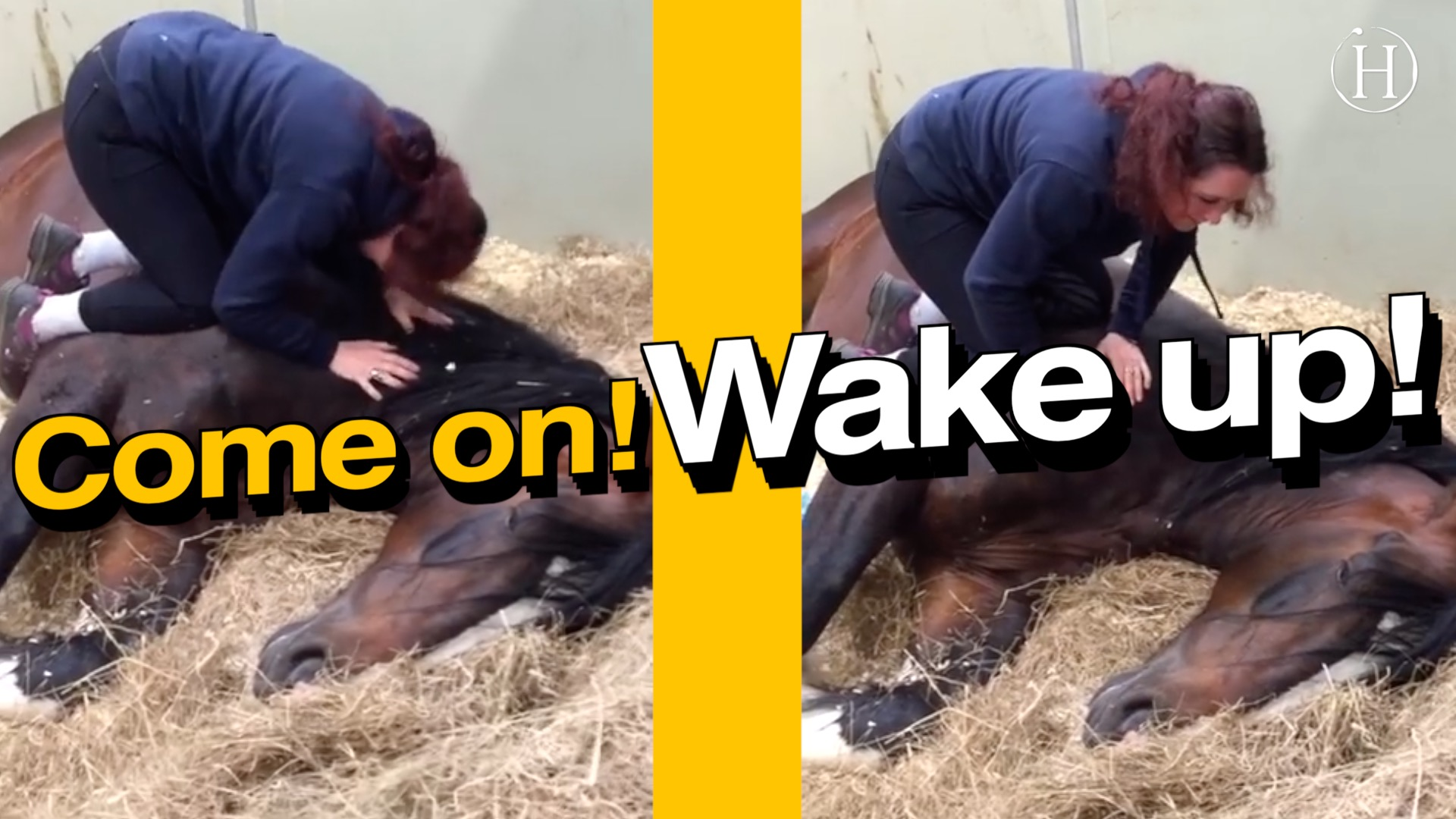 Horse Won't Wake Up for Work | Humanity Life
