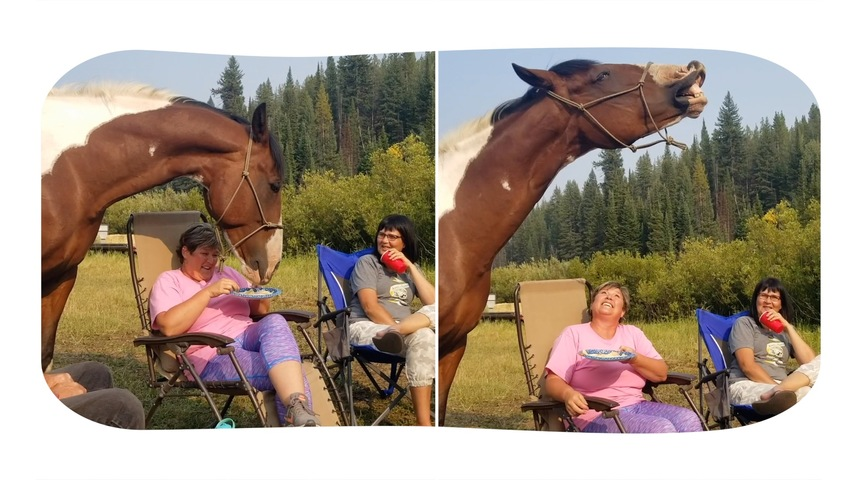 Grinning Horse Loves Eating Chips