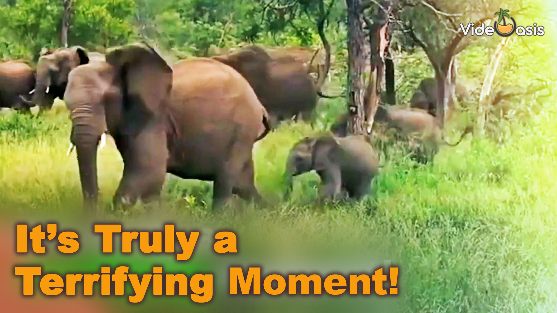 When these tourists encounter a group of elephants in national park |VideOasis