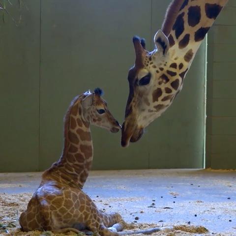 Newborn baby animals around the world
