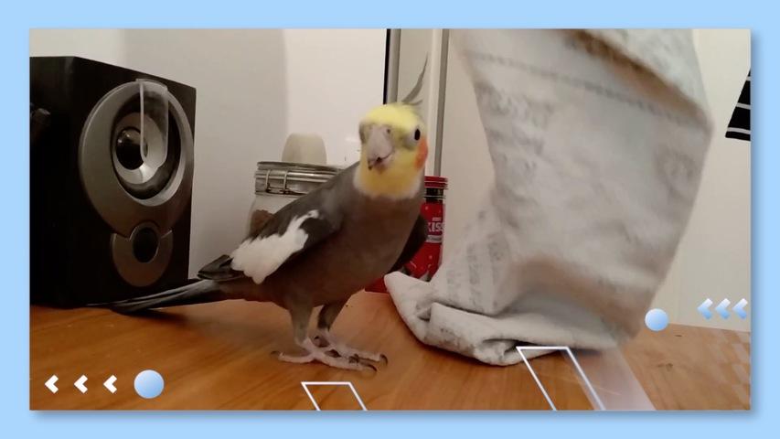 Bird Sings Popular Children's Song