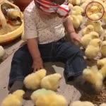 ¡A esta bebé le encanta estar rodeada de pollitos! 😍