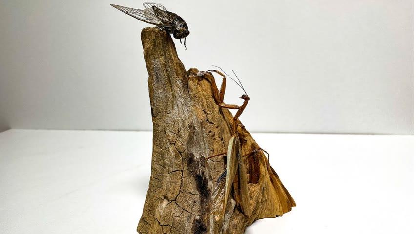 Turning Praying Mantis and Cicada in epoxy resin (Crazy resin reaction)