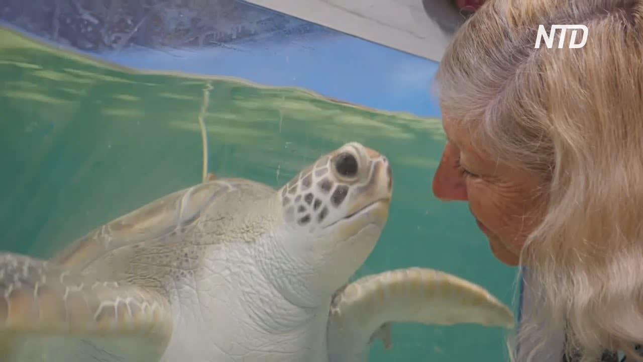 Черепахи с патологиями: что обнаружили в водах Большого барьерного рифа