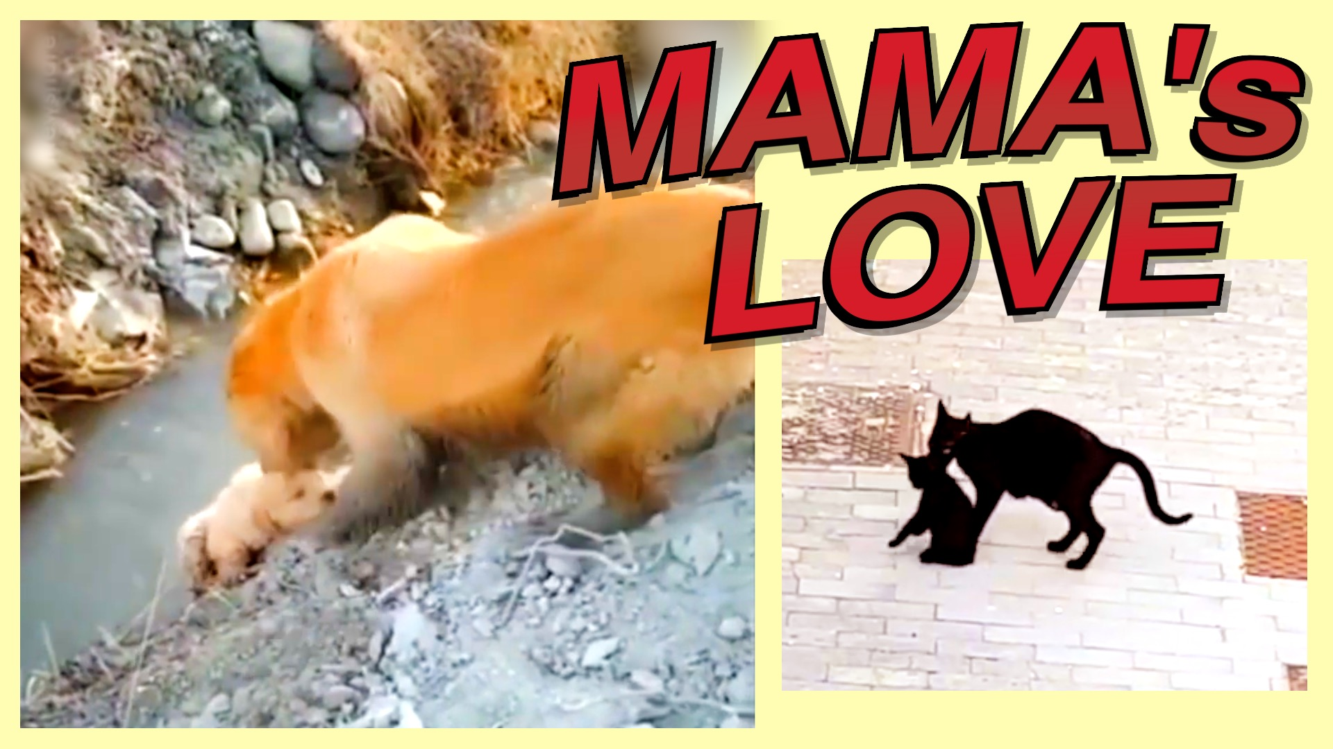 A Mother's Love | Humanity Life