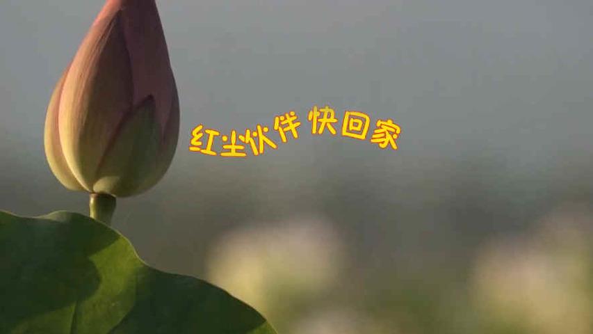 音樂視頻(兒歌):紅塵夥伴快回家
