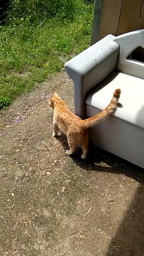 Jasper The Cat Talking