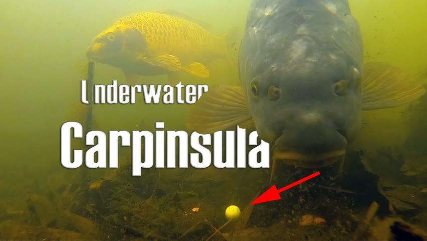 Underwater behavior of carp at Carpinsula (2021)
