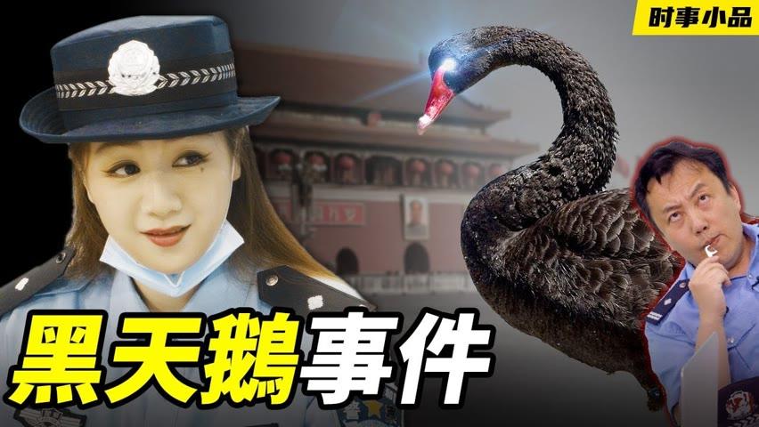 天啊,天安門廣場竟然來了一隻鵝鬧事!!!【时事小品|黑天鵝事件】|大陸新聞解毒