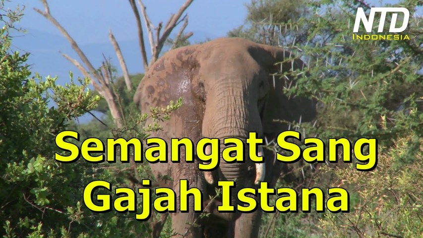 Kisah Inspiratif: Semangat Sang Gajah Istana