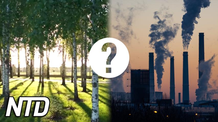 Är netto noll endast tvång eller räddar det planeten? | NTD NYHETER