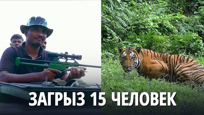 В Индии ищут тигра-убийцу