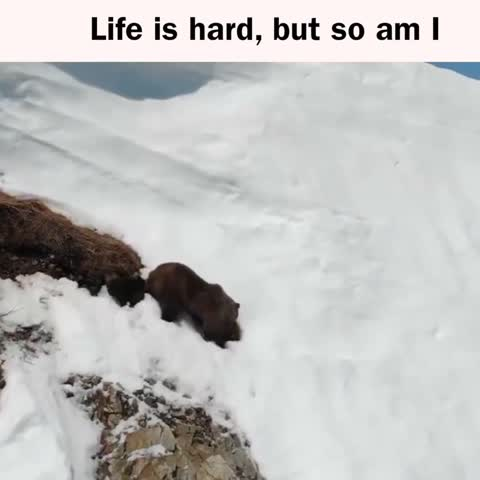 This Bear Cub is Proof You Should Never Give Up