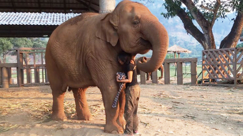 Elephant Falls Asleep After Lullaby