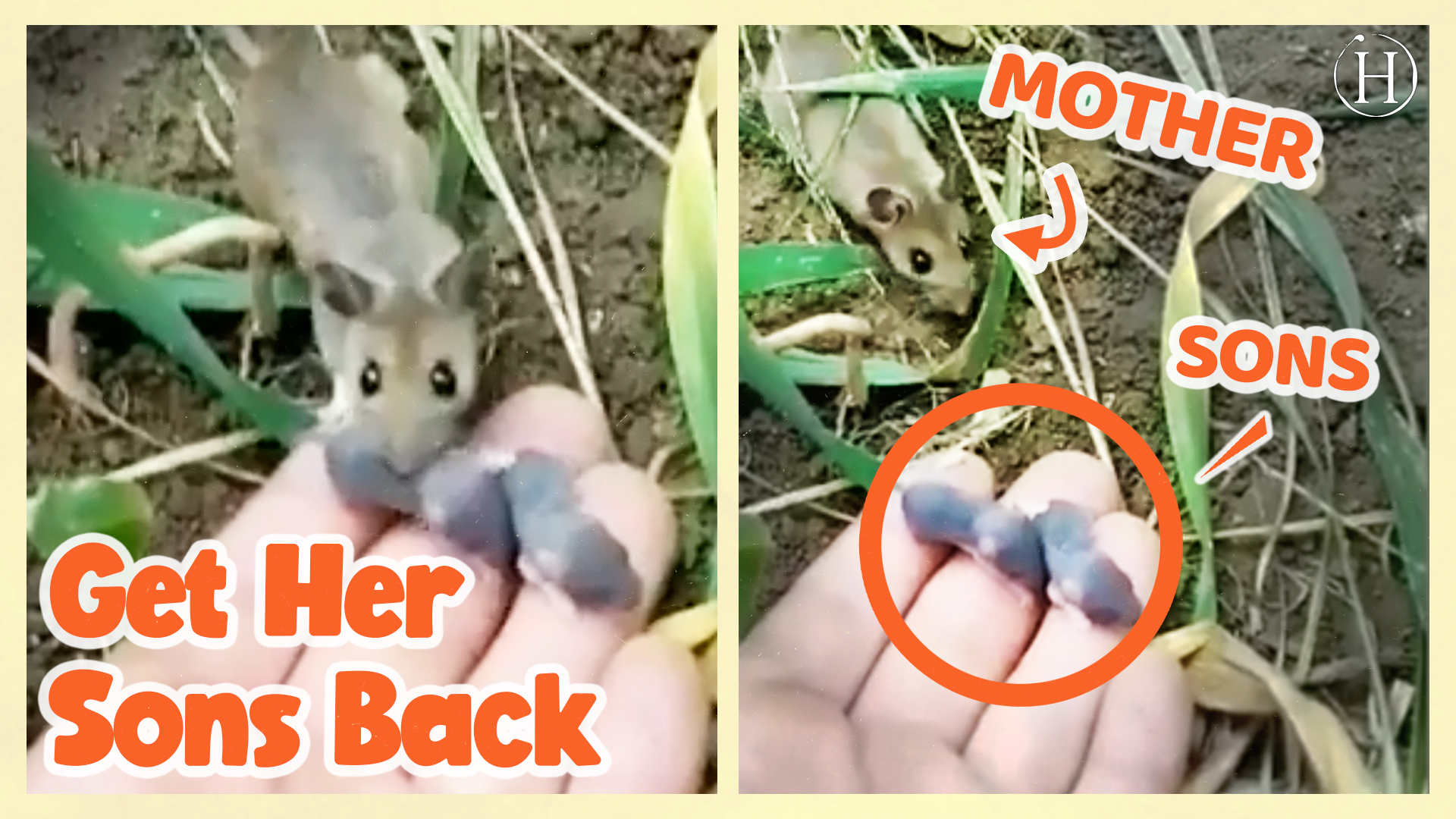 Animals Mothers Uplifting Moments | Humanity Life