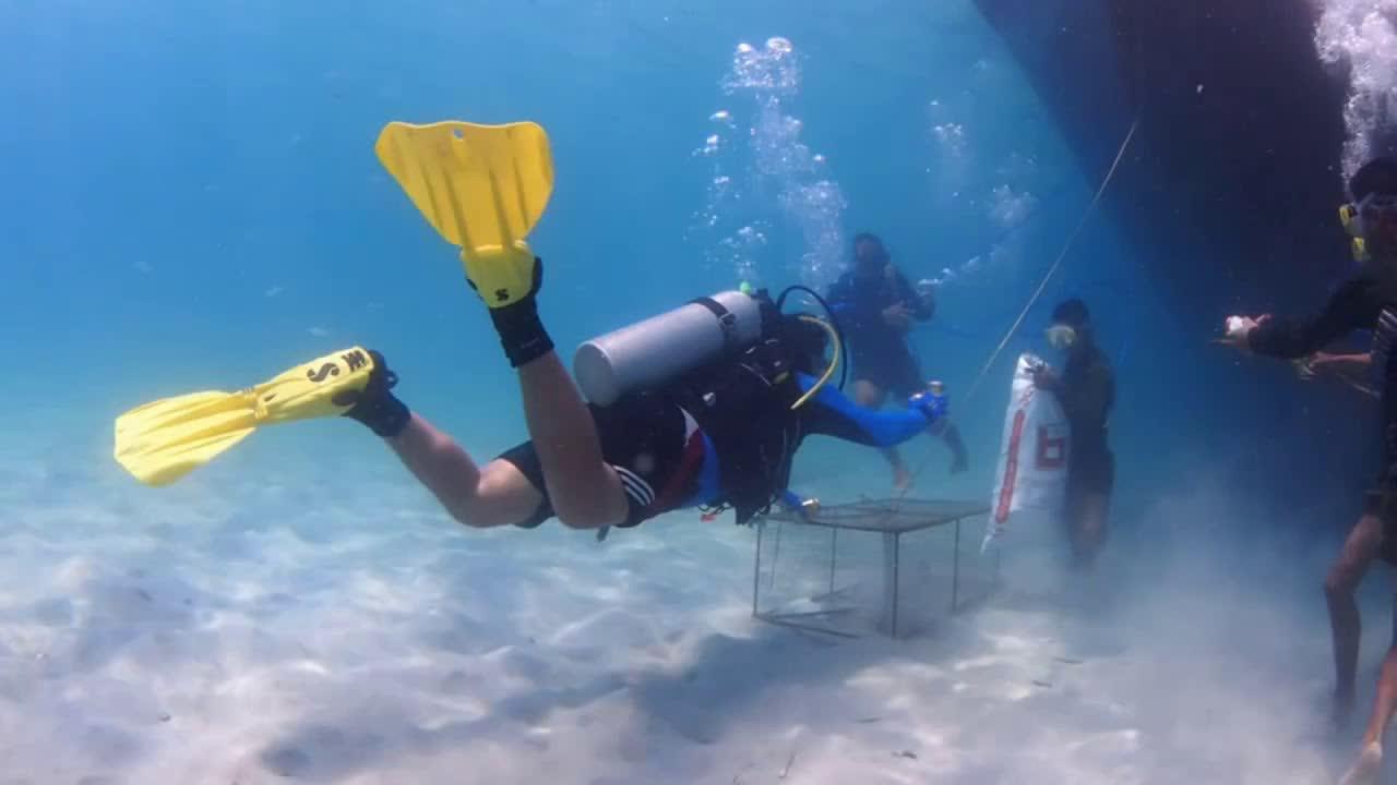 ▷ So beautiful underwater world - Cambodia Sea