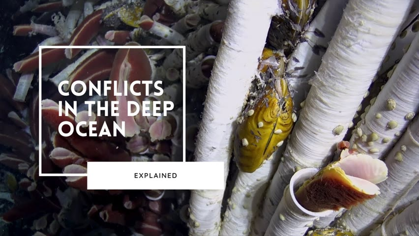 The Vicious World of Deep Sea Competition