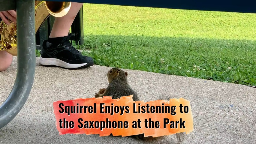 Squirrel Enjoys Listening to the Saxophone at the Park