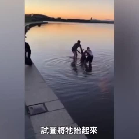 澳洲坎培拉(Canberra), 一隻受困結冰湖中的袋鼠, 被幾位熱心男子及時救出,令人訝異的是, 袋鼠獲救後意然向救命恩人「握手致謝」。袋鼠-謝謝救牠的人
