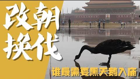 【平凡·周周侃】谁最需要#黑天鹅 降临#天安门广场 ??到底是倒习阵营?还是倒共阵营?还是#习近平 独裁阵营??