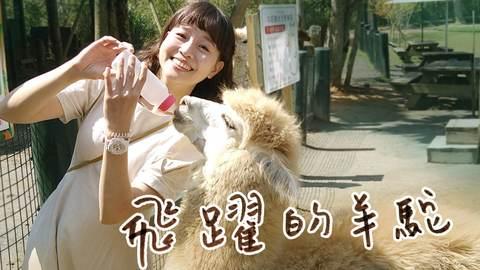 【新竹北埔】超萌超療癒親子動物農場!羊駝飛奔、打滾好可愛,生氣真的會吐口水!金剛鸚鵡會算數?大鵜鶘、小樹懶,飼育員真是太厲害!還有森林系空靈步道~|1000步的繽紛台灣 (Ep381)