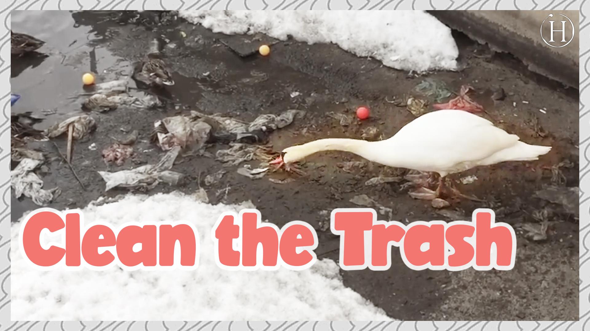 Swan Cleans Lake of Trash  | Humanity Life