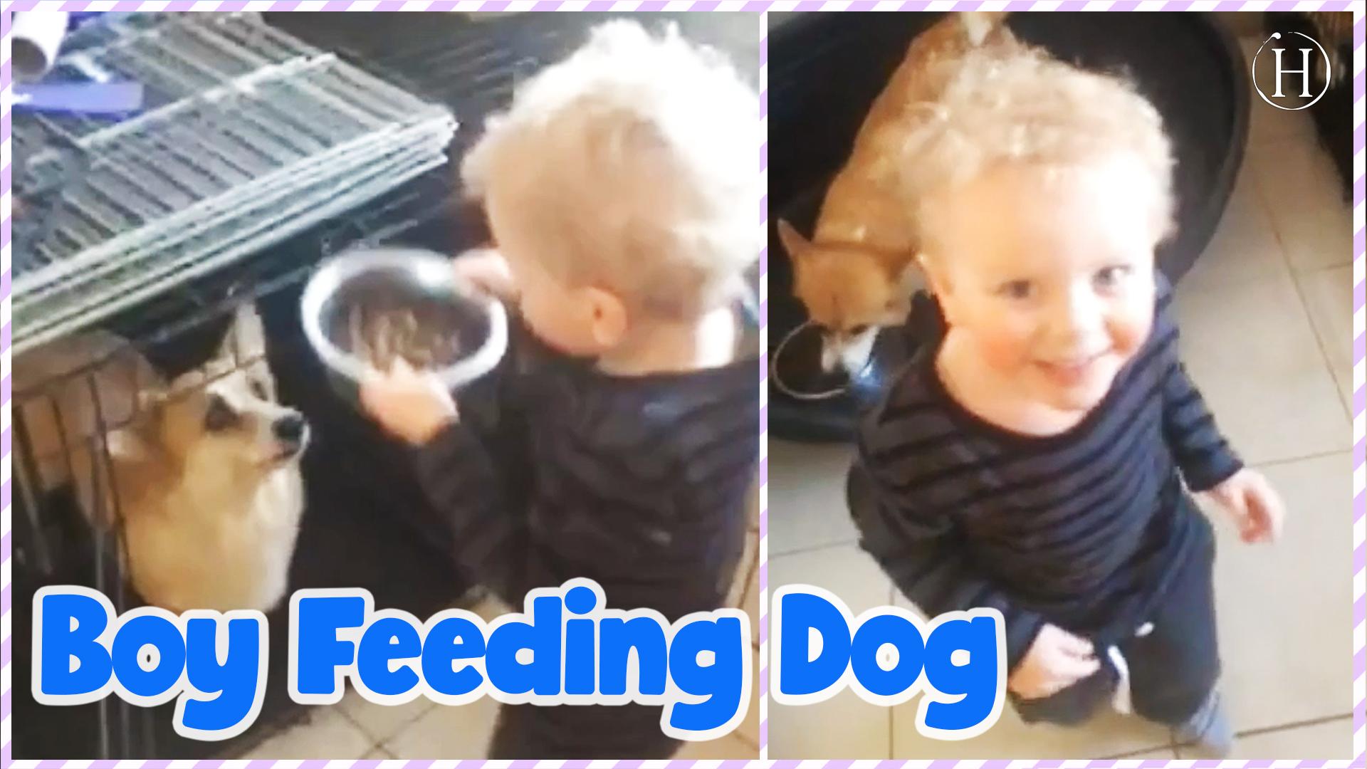 Toddler Feeds Corgis | Humanity Life