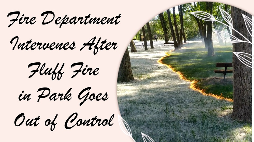 Fire Department Intervenes After Mysterious Fluff Fire in Park Goes Out of Control