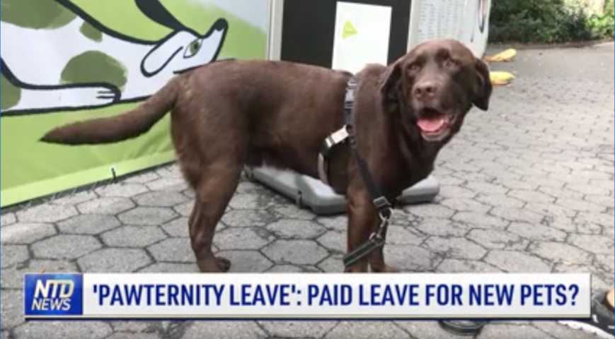 'Pawternity Leave': Workers Days Off for Pets?