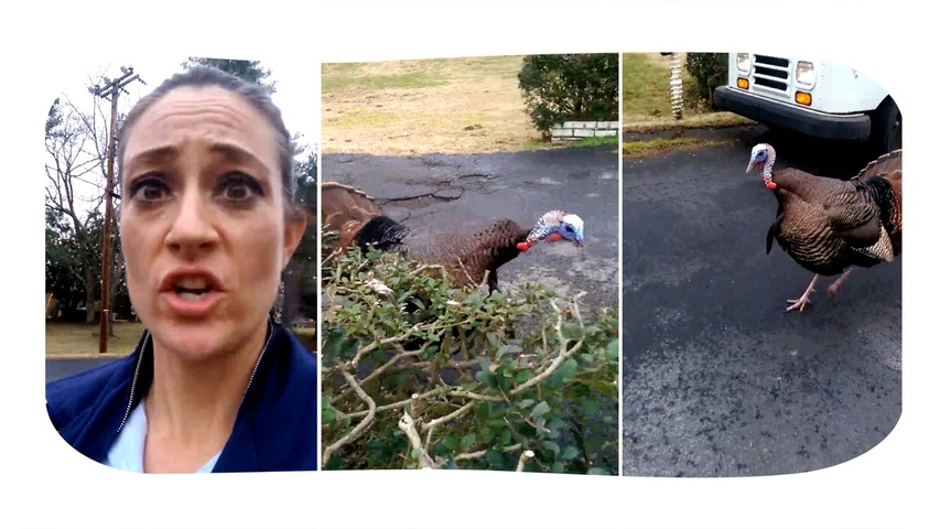 Mail Carrier Chased by a Turkey