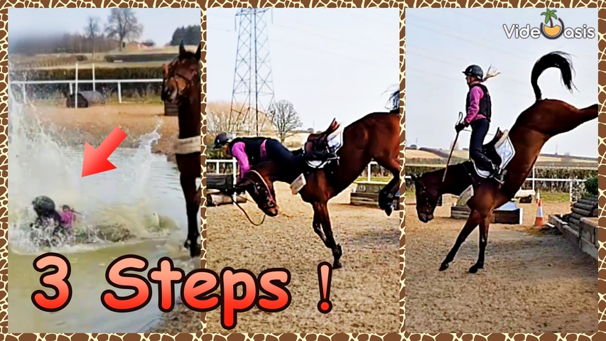 Funny Horses VideOasis