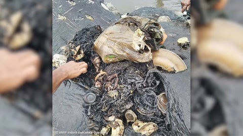 Dead whale had a bunch of plastic stuff in stomach