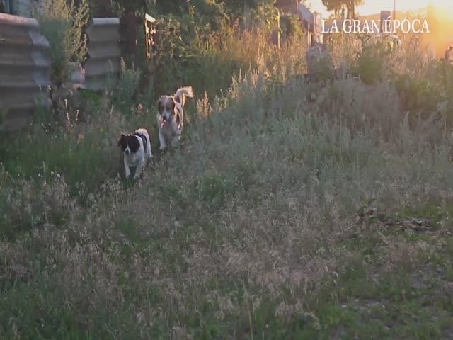 Ordenanza en Argentina legaliza la matanza de perros callejeros